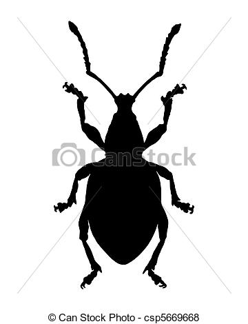 Weevil clipart #13, Download drawings