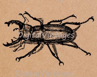 Weevil svg #8, Download drawings