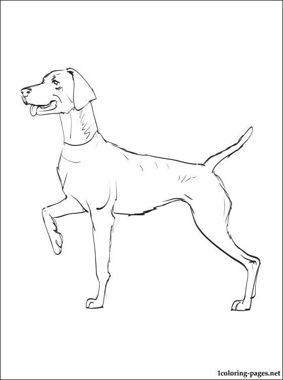 Weimeraner coloring #8, Download drawings