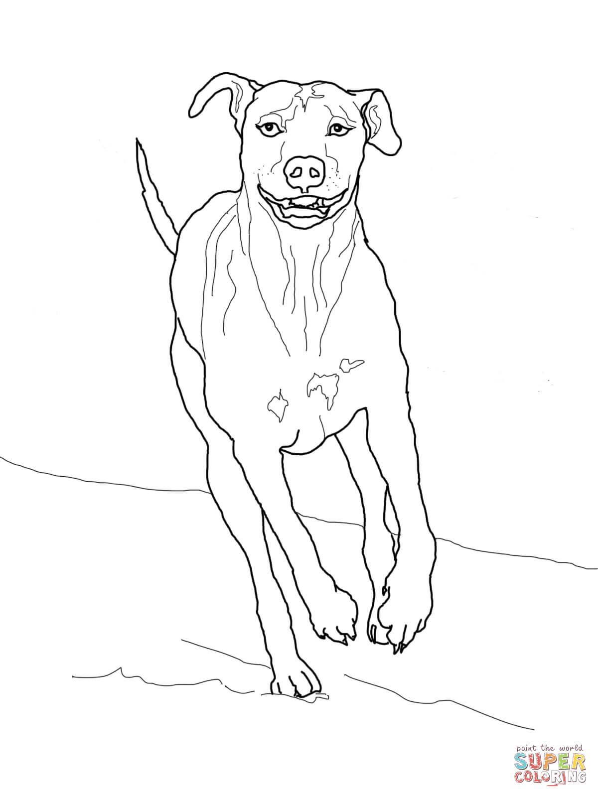 Weimaraner coloring download weimaraner coloring for Weimaraner coloring pages