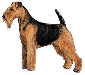 Welsh Terrier clipart #19, Download drawings
