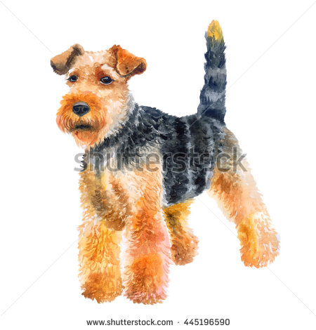Welsh Terrier clipart #13, Download drawings