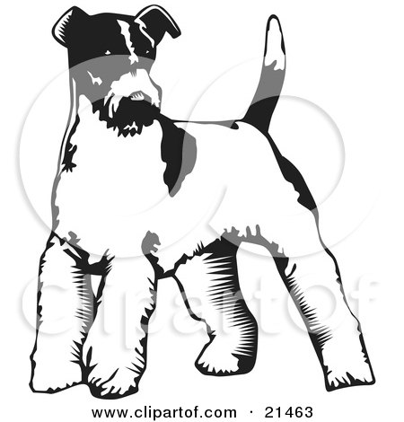 Welsh Terrier clipart #16, Download drawings