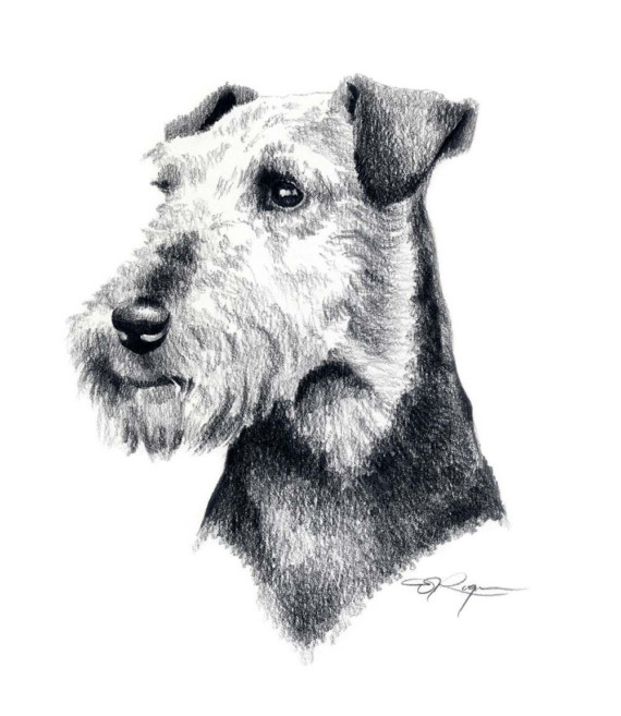 Welsh Terrier clipart #17, Download drawings