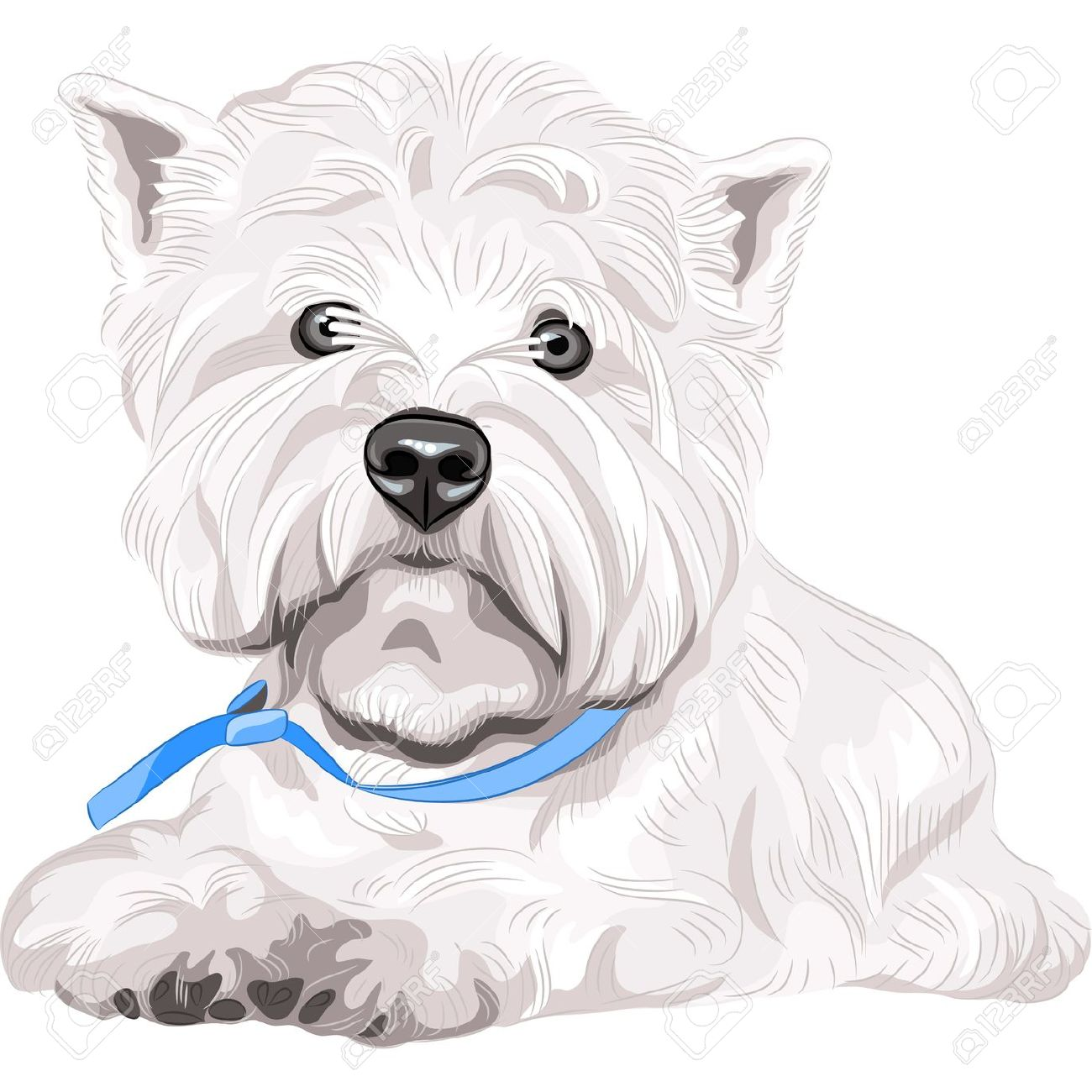 West highland white terrier coloring download west for Westie coloring pages