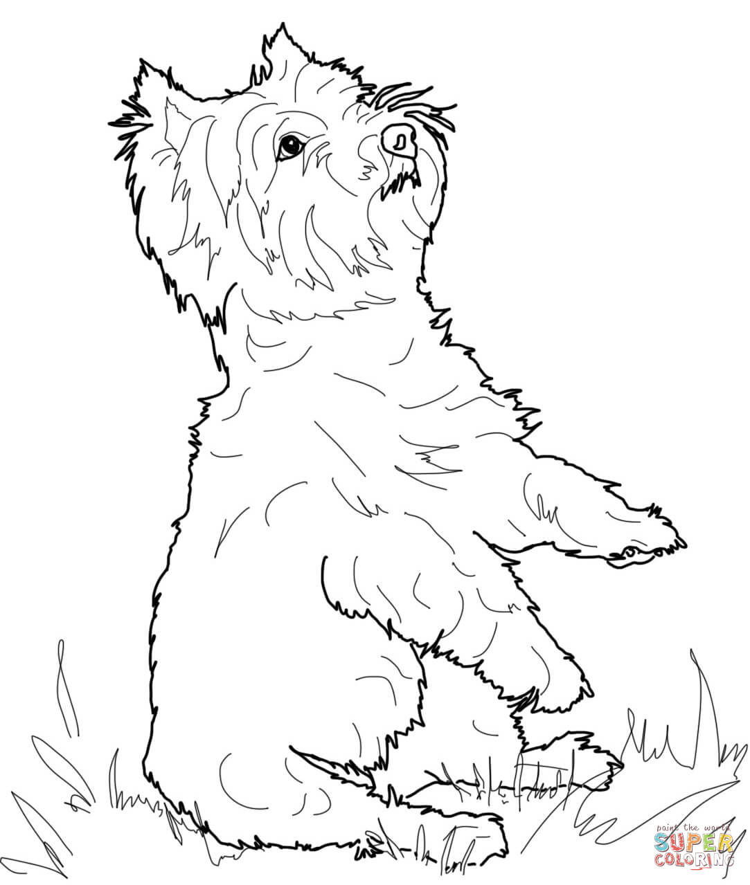 Yorkshire Terrier coloring #15, Download drawings