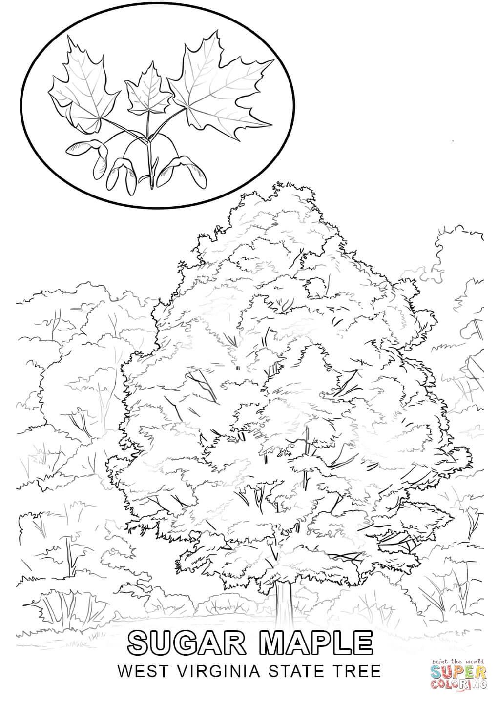 West Virginia coloring #3, Download drawings
