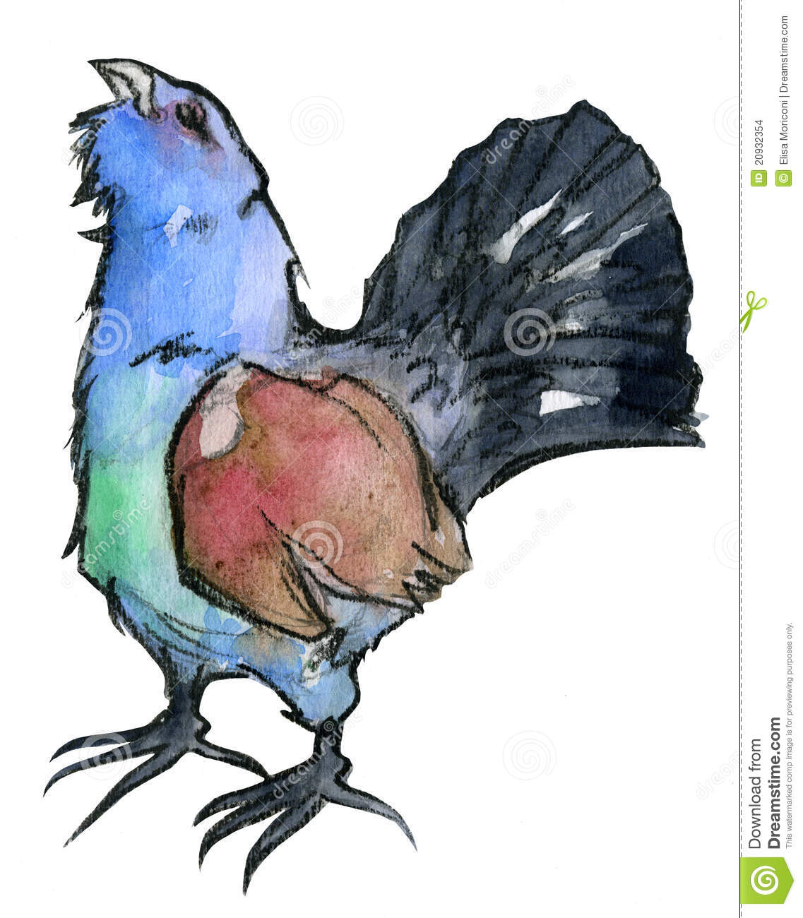 Western Capercaillie clipart #13, Download drawings