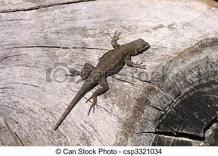 Western Fence Lizard clipart #14, Download drawings