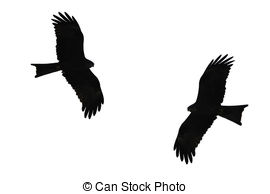 Western Marsh Harrier clipart #1, Download drawings