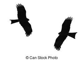 Western Marsh Harrier clipart #20, Download drawings