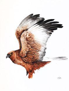Western Marsh Harrier svg #2, Download drawings