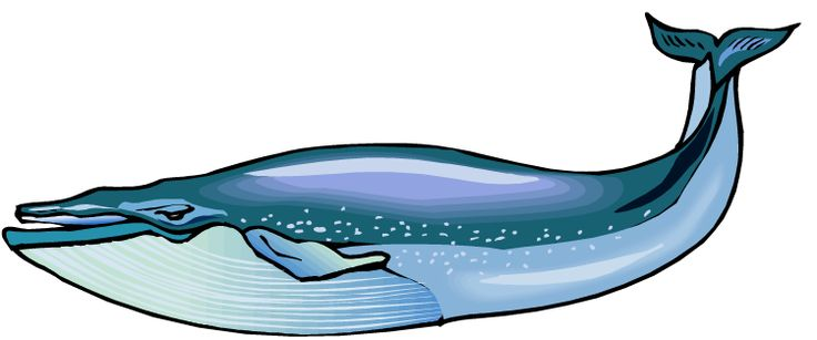 Whale clipart #7, Download drawings
