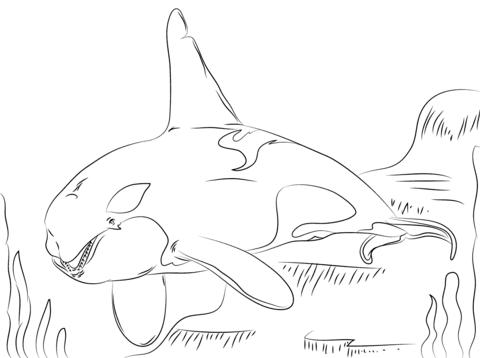 Orca coloring #15, Download drawings