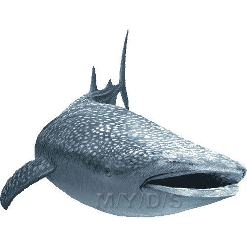 Whale Shark clipart #3, Download drawings
