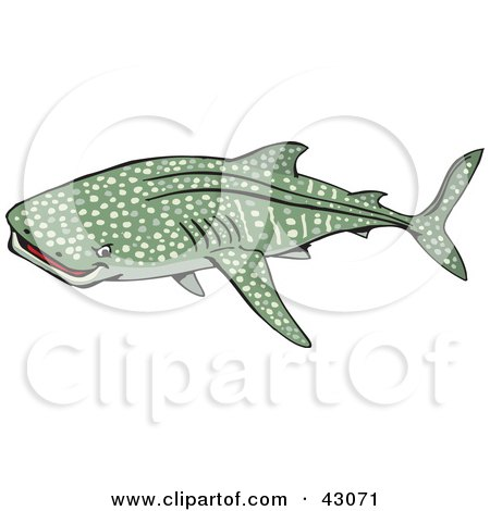 Whale Shark clipart #11, Download drawings