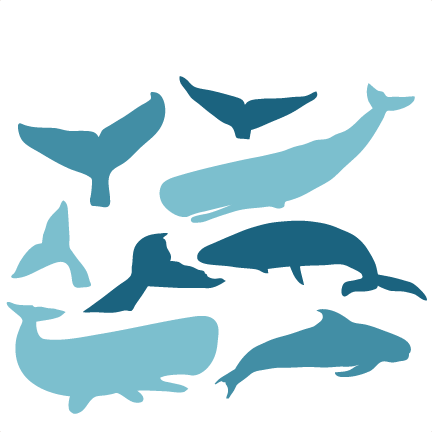 Whale svg #84, Download drawings