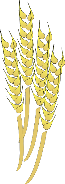 Wheat clipart #13, Download drawings