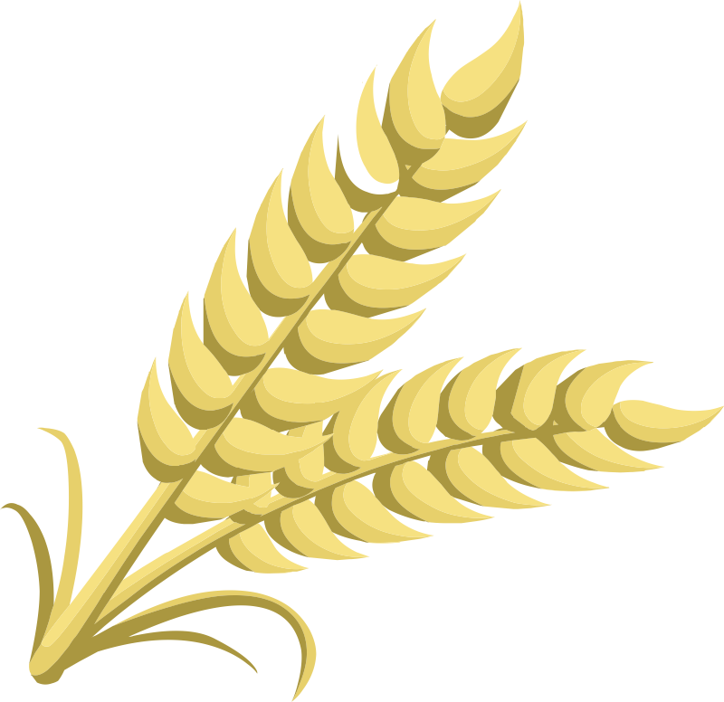 Wheat clipart #19, Download drawings