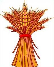 Wheat clipart #17, Download drawings