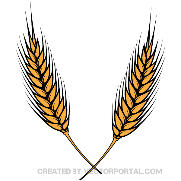Wheat clipart #12, Download drawings
