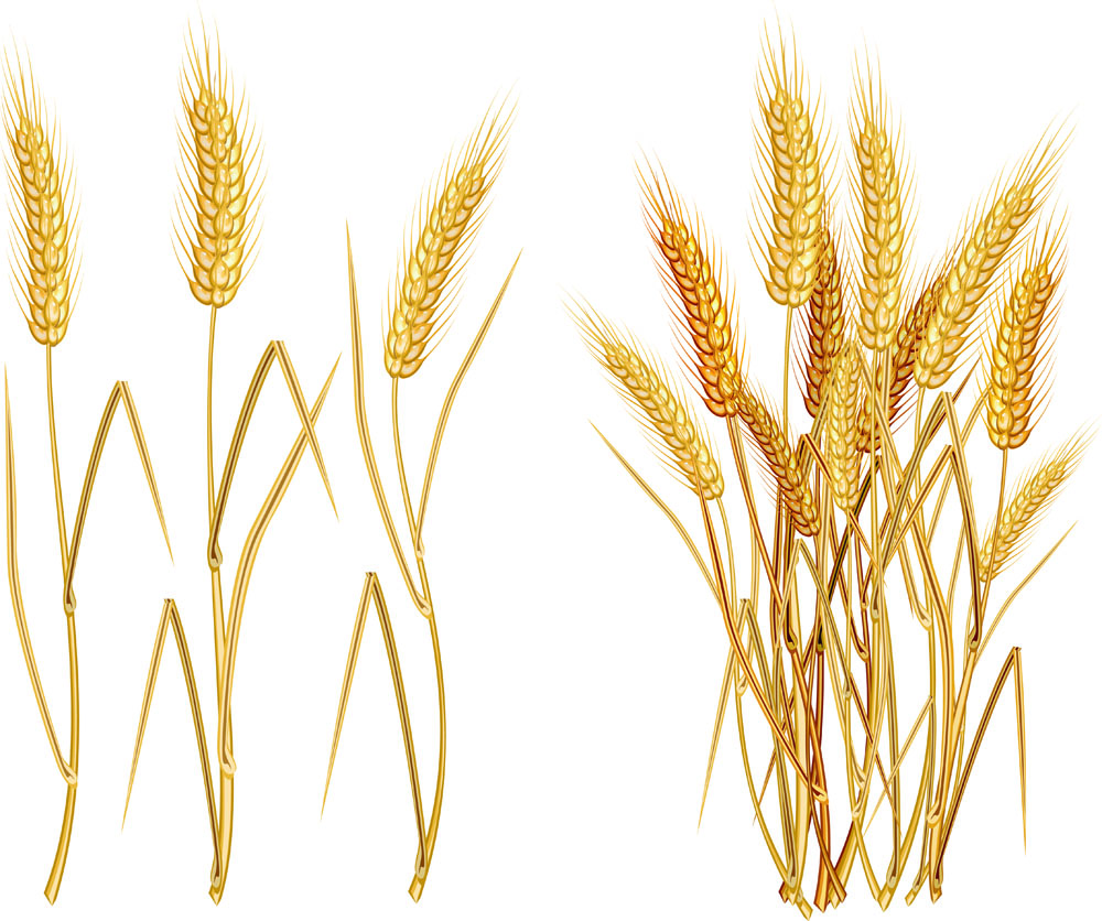 Wheat svg #5, Download drawings