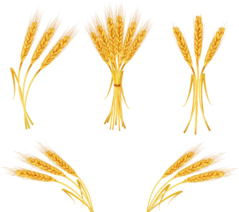 Wheat svg #13, Download drawings