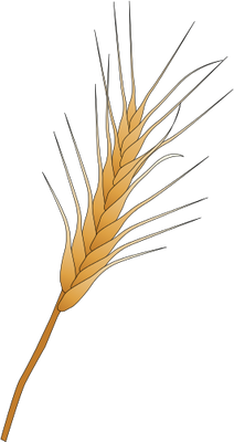 Wheat svg #8, Download drawings