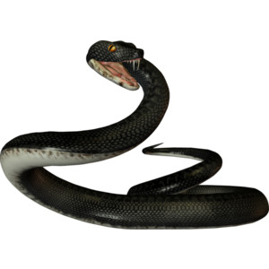 Whip Snake clipart #9, Download drawings
