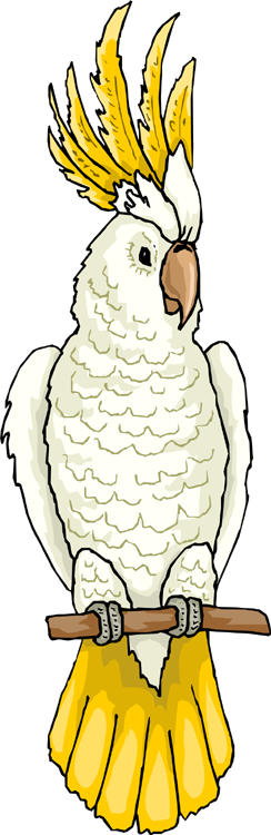 White Cockatoo clipart #1, Download drawings