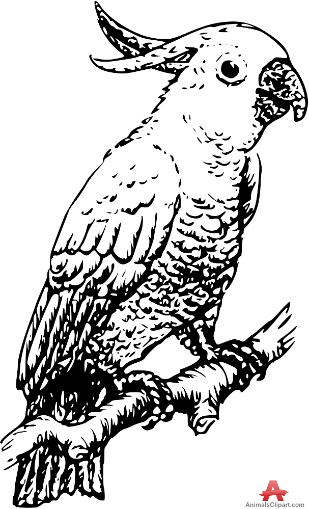 White Cockatoo clipart #2, Download drawings