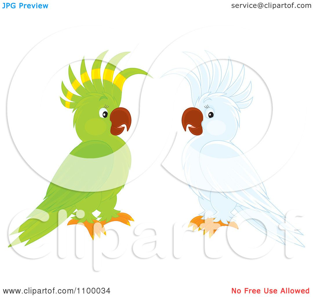 White Cockatoo clipart #5, Download drawings
