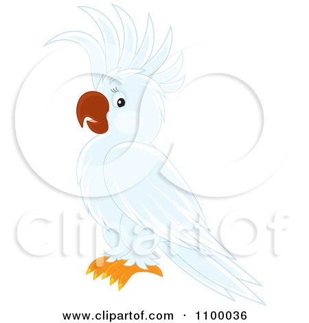 White Cockatoo clipart #9, Download drawings