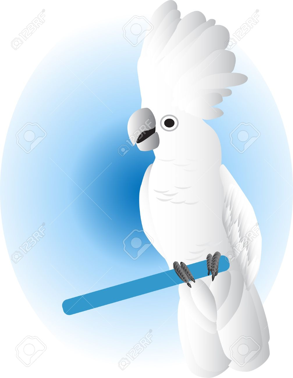 White Cockatoo clipart #17, Download drawings