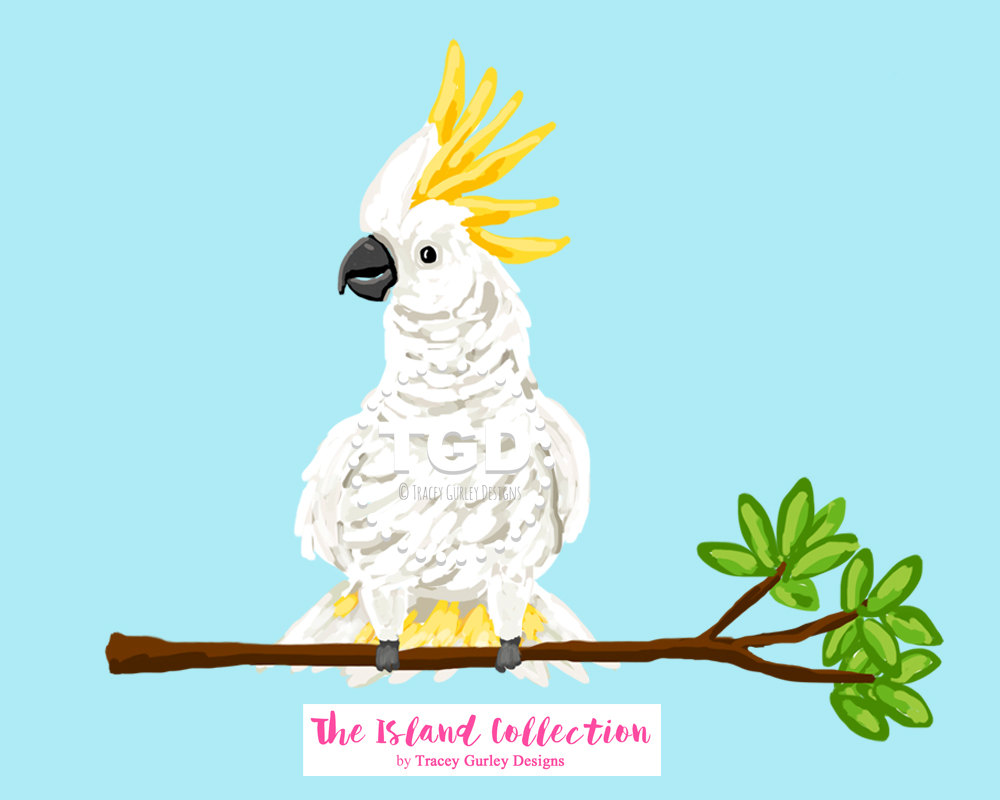 White Cockatoo clipart #3, Download drawings
