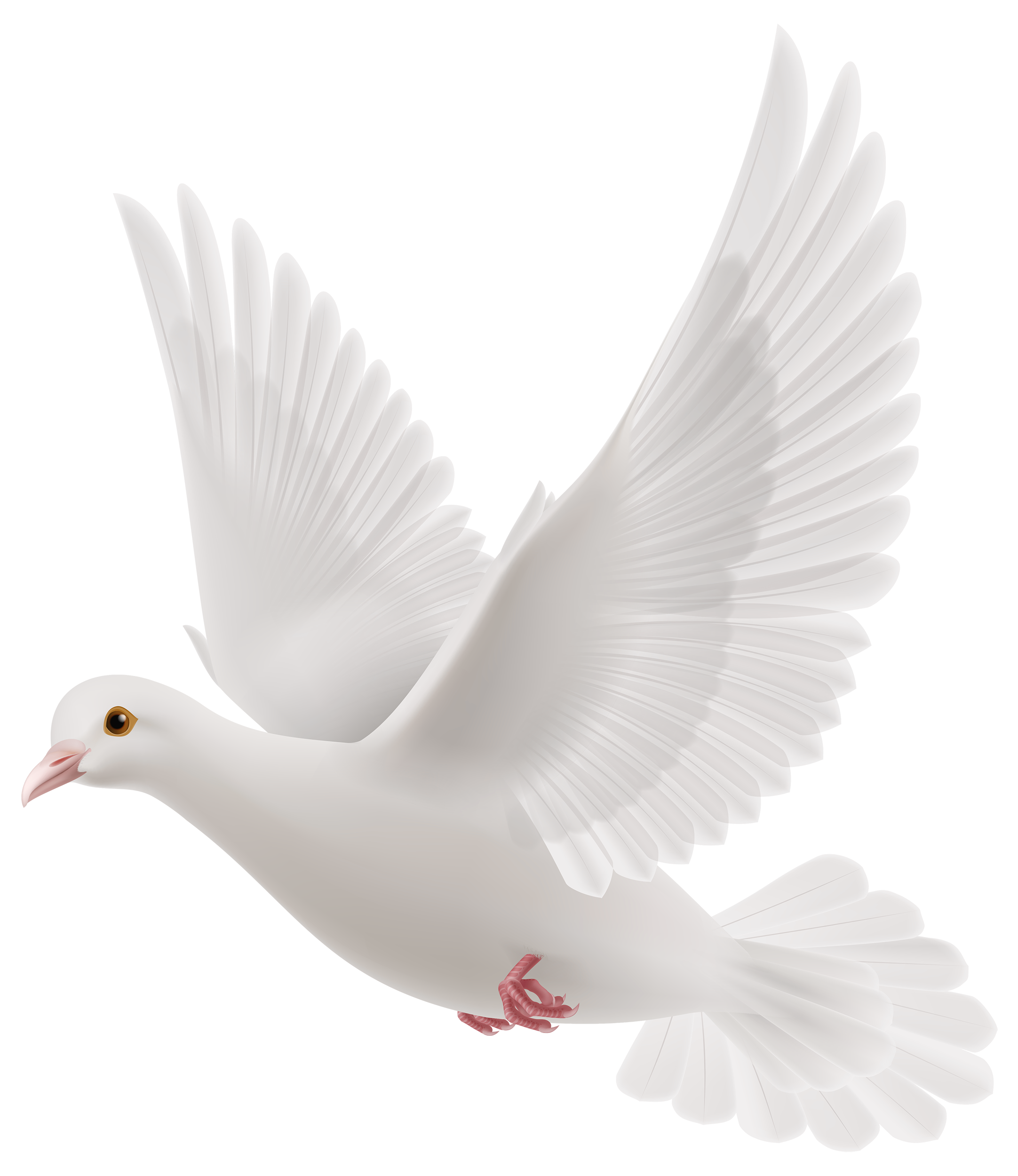 White Dove clipart #4, Download drawings