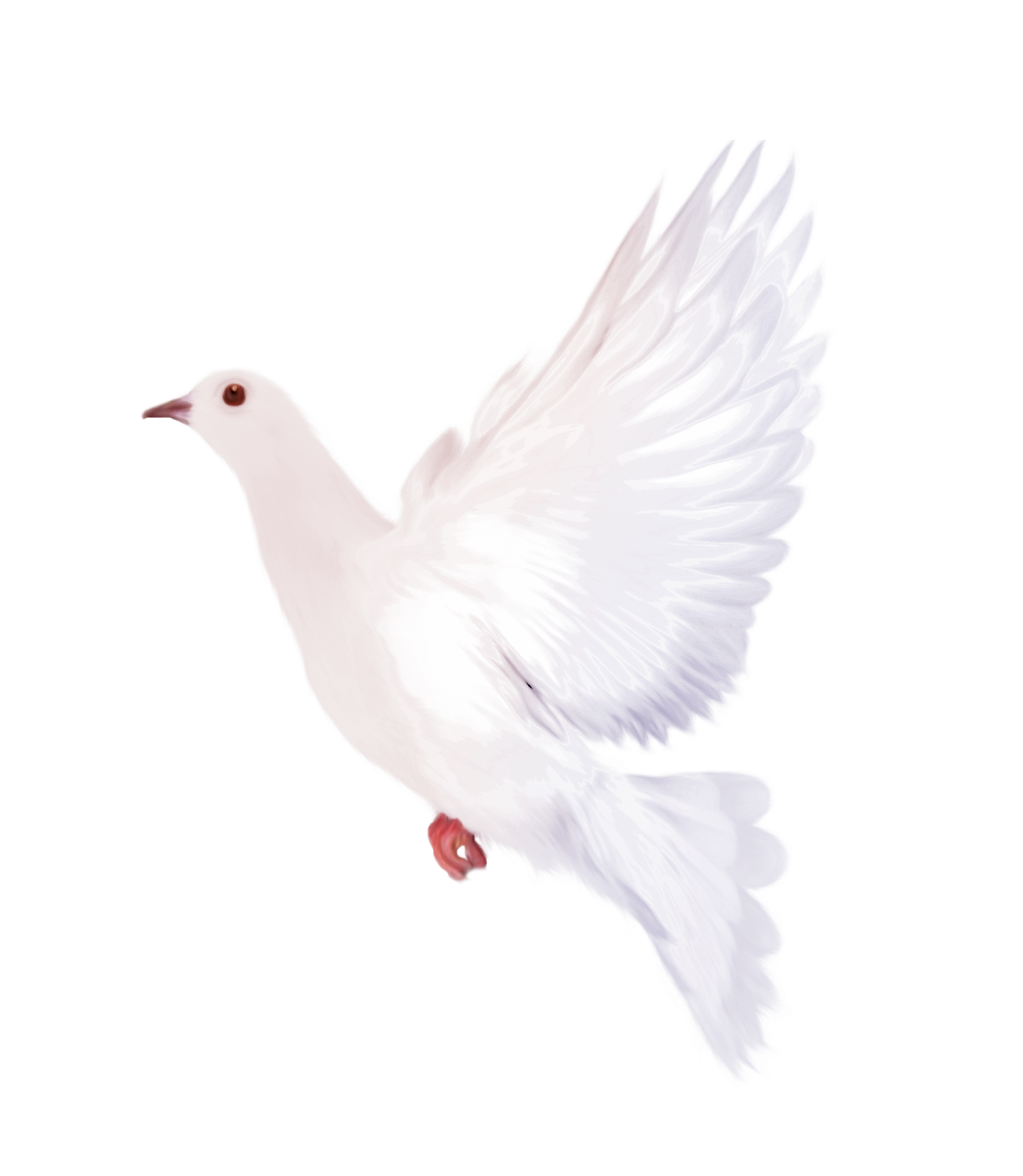 White Dove clipart #5, Download drawings