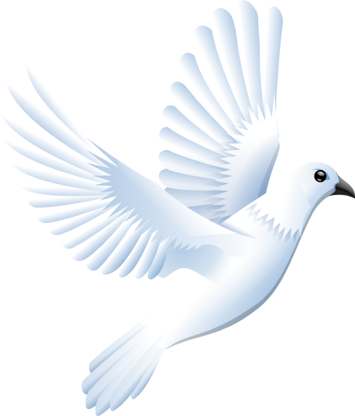 White Dove clipart #20, Download drawings