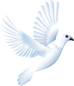 White Dove clipart #17, Download drawings
