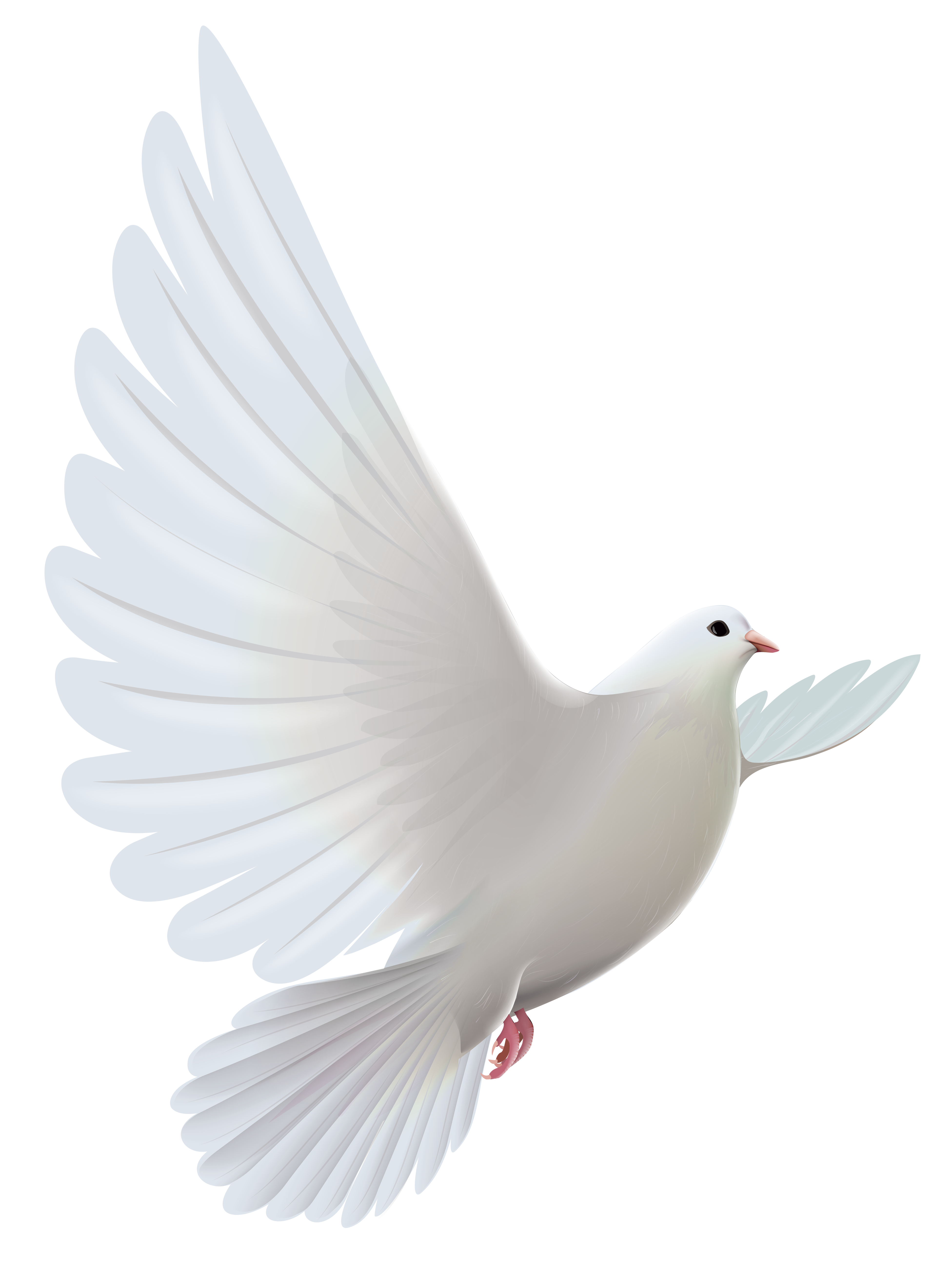 White Dove clipart #3, Download drawings