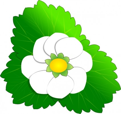 White Flower clipart #7, Download drawings