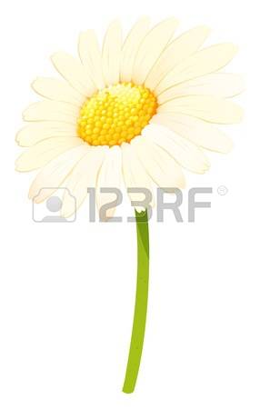 White Flower clipart #13, Download drawings