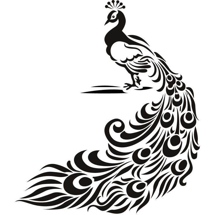 White Peafowl clipart #14, Download drawings