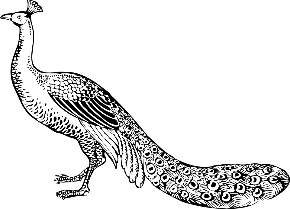 White Peafowl svg #2, Download drawings