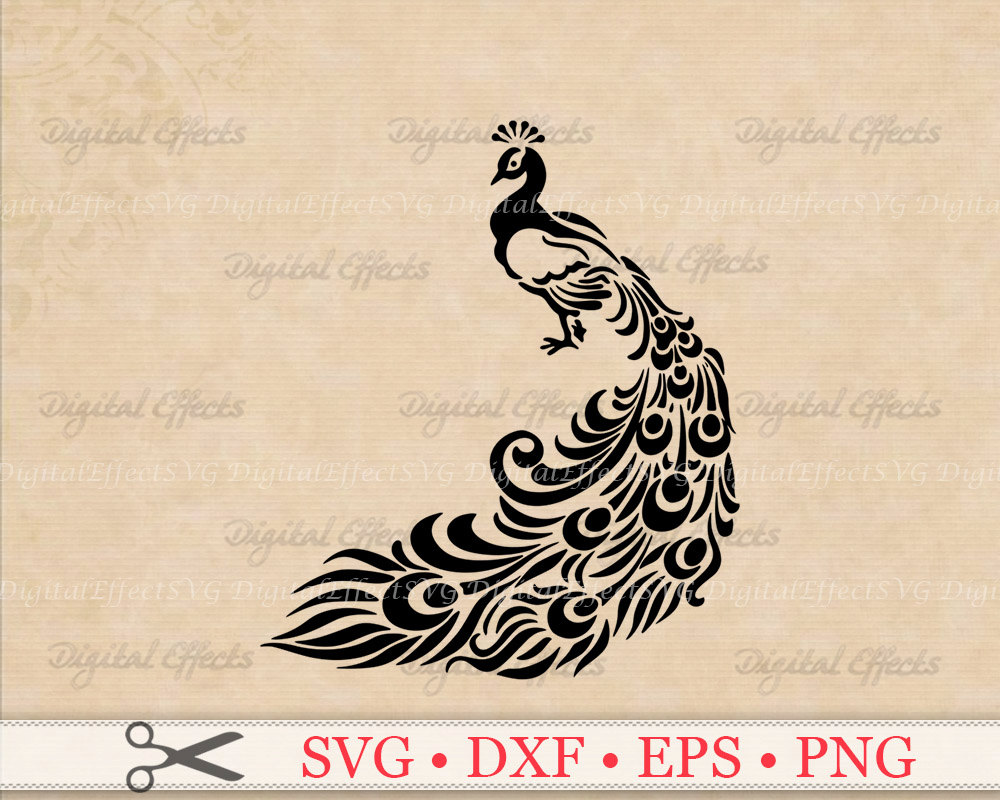 White Peafowl svg #17, Download drawings