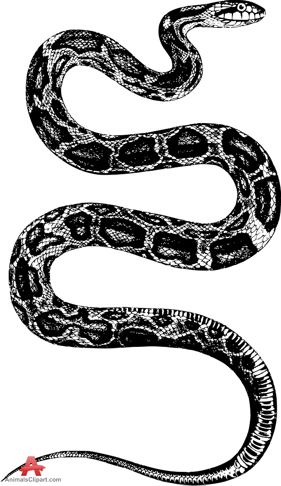 White Python clipart #6, Download drawings