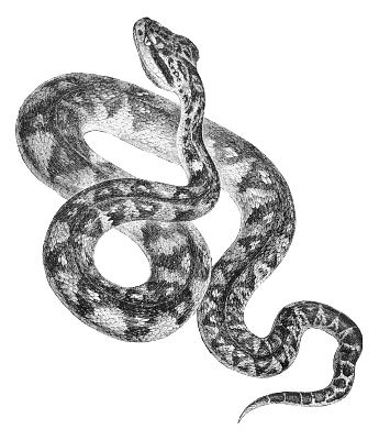 White Python clipart #13, Download drawings