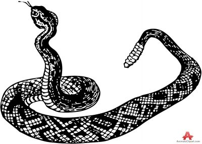 White Python clipart #8, Download drawings
