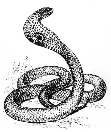White Python clipart #2, Download drawings