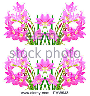 White Rain Lily clipart #12, Download drawings